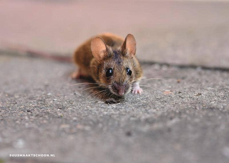 muizen verjagen